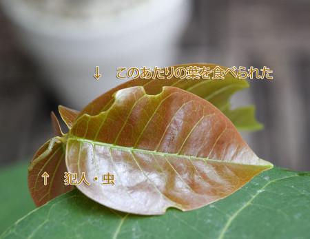 20150707_41